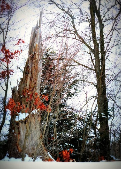 Landscape Greeting Card featuring the photograph Early Snow by Kimberly Andren