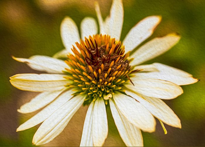 North Cascades Greeting Card featuring the painting Echinacea Fading Beauty by Omaste Witkowski