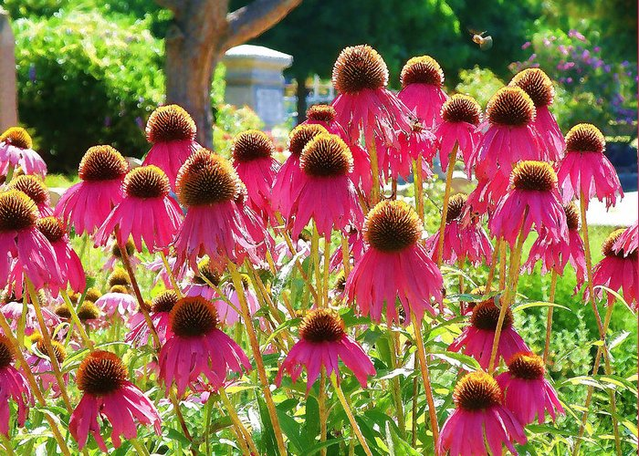 Echinacea Flowers Greeting Card featuring the digital art Echinacea Flowers by Devalyn Marshall