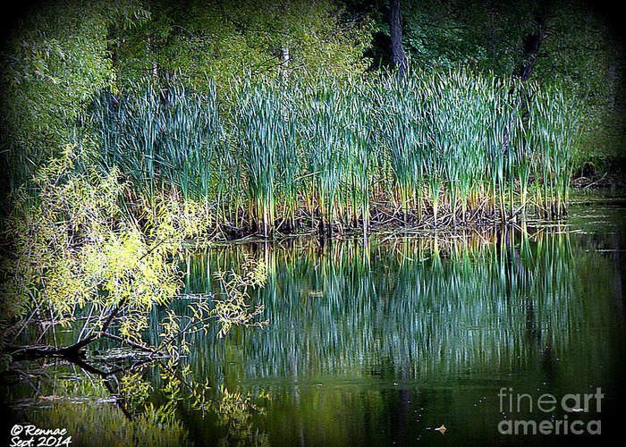 Landscape Greeting Card featuring the photograph Edge Of Reflections by Rennae Christman