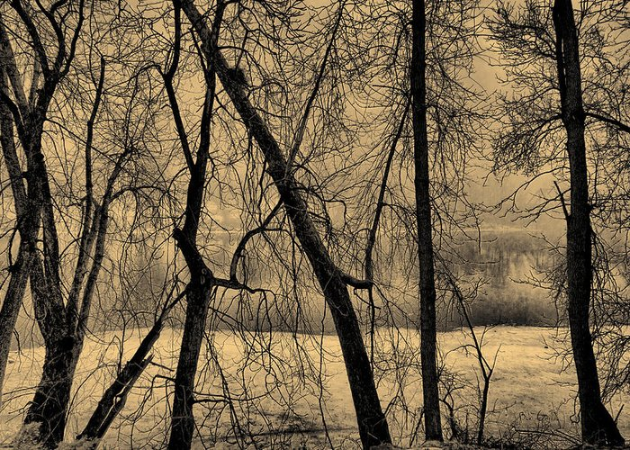 Tree Greeting Card featuring the photograph Edge Of Winter by Bob Orsillo
