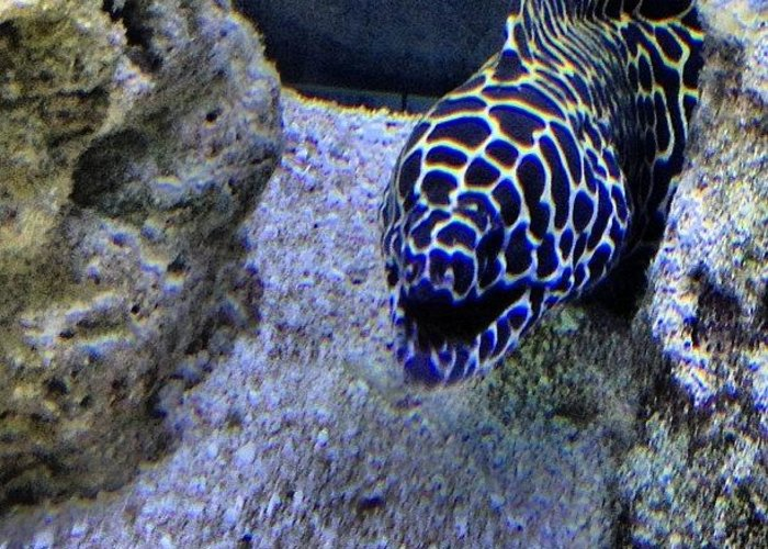 Underwater Greeting Card featuring the photograph #eel #saltwater #underwater #water by Amber Campanaro