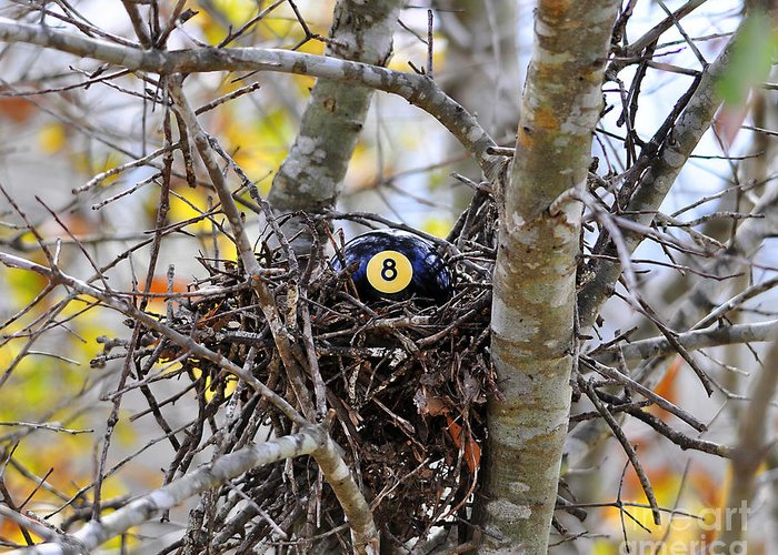 Bird Nest Greeting Card featuring the photograph Eggstraordinary by Al Powell Photography USA