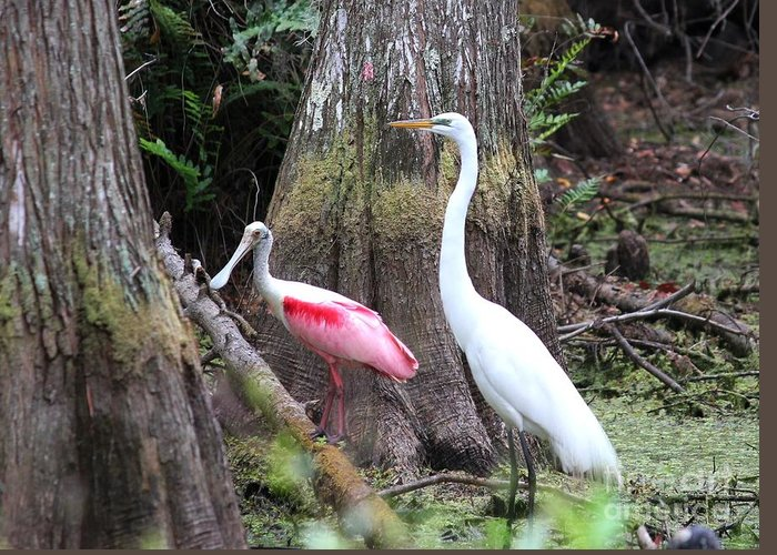 Roseate Spoonbill Greeting Card featuring the photograph Egret And Spoonbill by Theresa Willingham