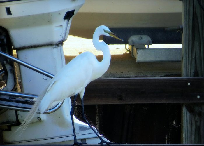 Egret Greeting Card featuring the photograph Egret At The Lake by Ella Kaye Dickey