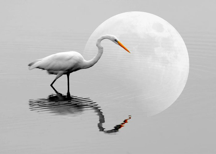 Bird Greeting Card featuring the photograph Egret With Moon by Diana Angstadt