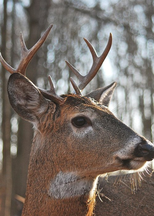 Whitetail Greeting Card featuring the photograph Eight Point Up Close 1100 by Michael Peychich