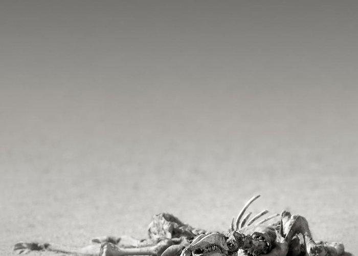Skeleton; Eland; Remains; Desert; Carcass; Bones; Arid; Desolation; Death; Sand; Art; Artistic; Black; White; B&w; Monochrome; Open; Plane; Antelope; Wild; Mammal; Animal; Wildlife; Nature; Africa; Kalahari; Lying; Lay Greeting Card featuring the photograph Eland Skeleton In Desert by Johan Swanepoel
