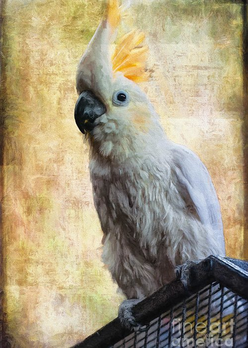 Sulphur Crested Cockatoo Greeting Cards