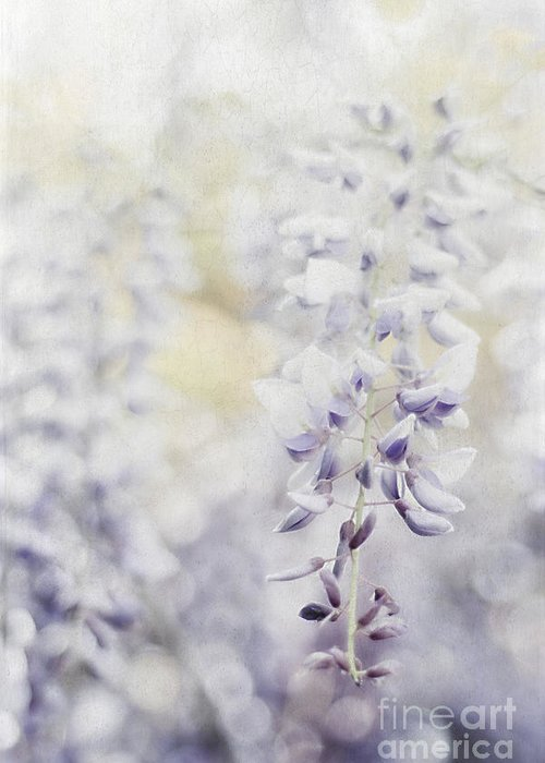 Asian Greeting Card featuring the photograph Elegant Wisteria by Darren Fisher