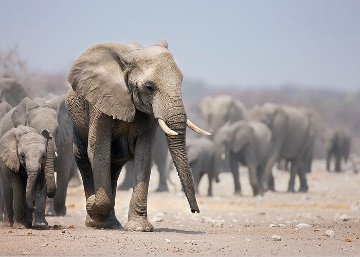 Front Walk Greeting Card featuring the photograph Elephant Feet by Johan Swanepoel