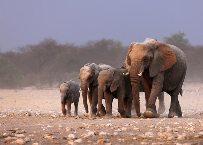 Wild Greeting Card featuring the photograph Elephant Herd by Johan Swanepoel