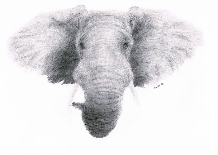 Elephant Greeting Card featuring the drawing Elephant by Lucy D