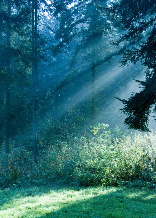 Nature Greeting Card featuring the photograph Elven Forest by Daniel Csoka