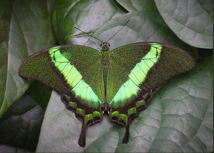 Green Greeting Card featuring the photograph Emerald Swallowtail Buttefly by Jack Nevitt