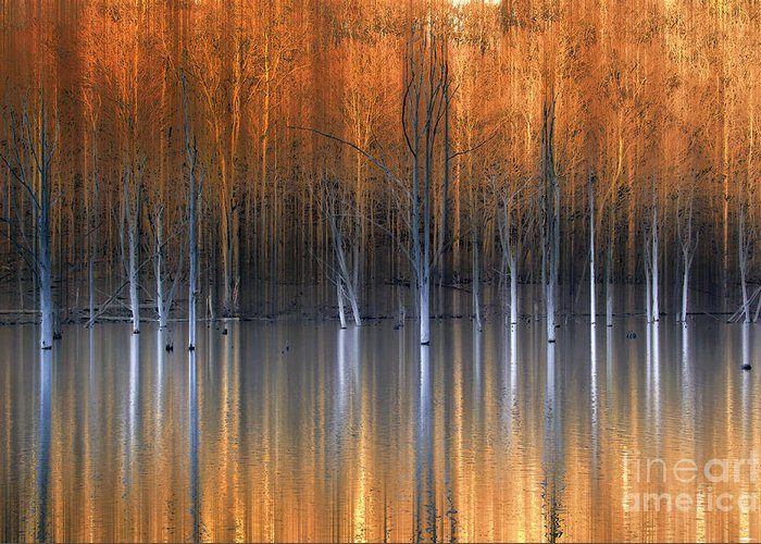 Award Winning Greeting Card featuring the photograph Emerging Beauties Reflected by Marco Crupi