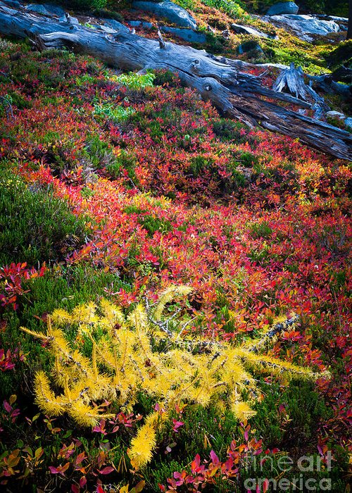 Alpine Lakes Wilderness Greeting Card featuring the photograph Enchanted Colors by Inge Johnsson