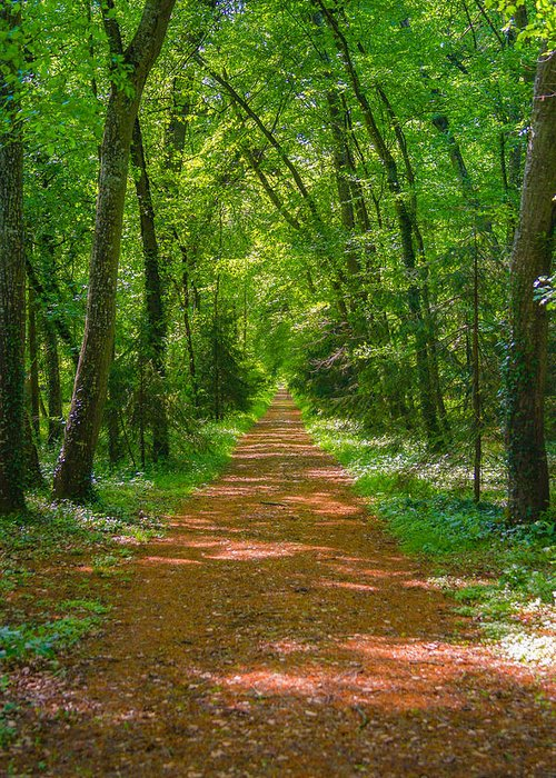Forest Greeting Card featuring the photograph Endless Trail Into The Forest by Nila Newsom