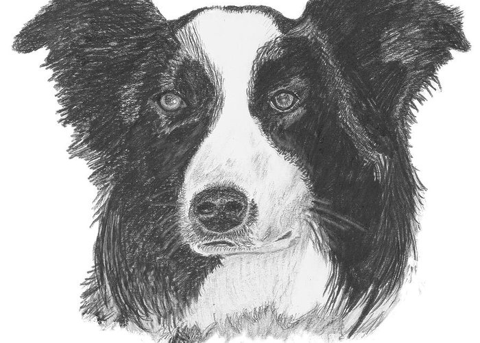 Border Collie Greeting Card featuring the drawing English Border Collie by Catherine Roberts