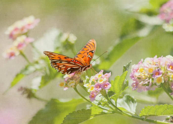 Butterfly Greeting Card featuring the photograph Enjoy The Little Things by Kim Hojnacki