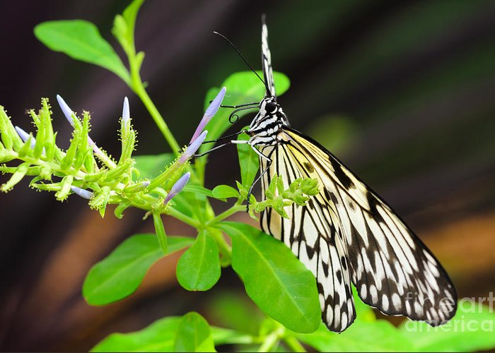 Butterfly Greeting Card featuring the photograph Enlightened by Tamara Becker