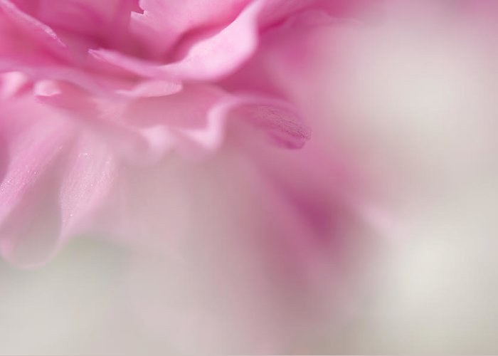 Carnation Greeting Card featuring the photograph Et Si Tu N Existais Pas by Jenny Rainbow