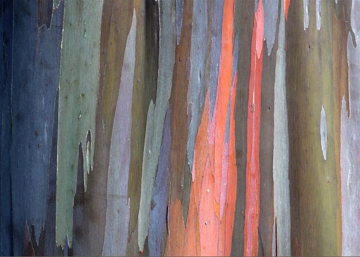 Eucalyptus Greeting Card featuring the photograph Eucalyptus Tree Bark by Karon Melillo DeVega