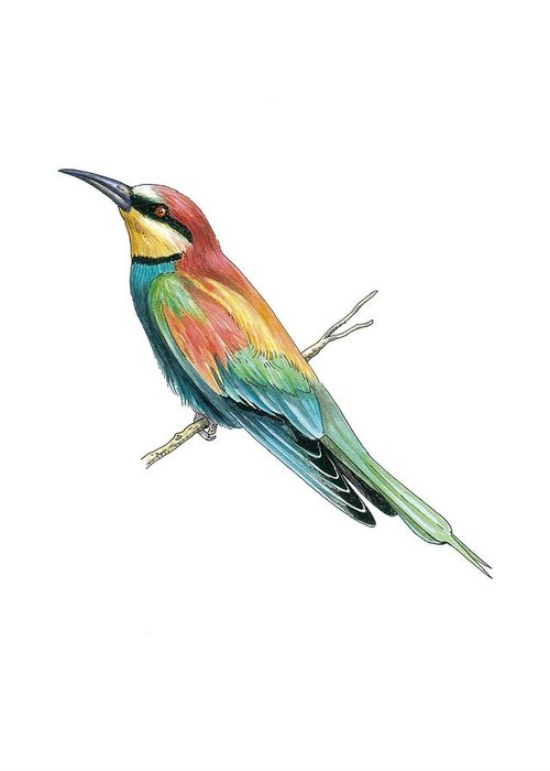 Cutout Greeting Card featuring the photograph European Bee-eater, Artwork by Science Photo Library