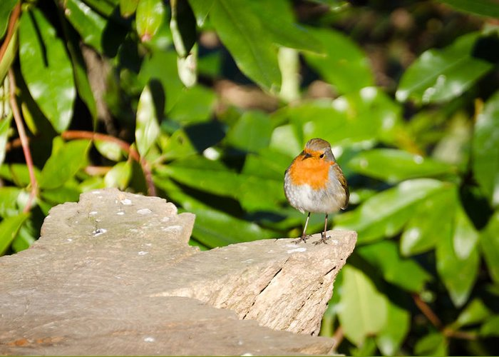 Animal Greeting Card featuring the photograph European Robin by David Head