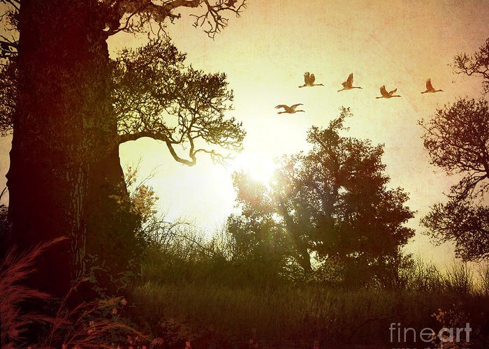 Digital Greeting Card featuring the photograph Evening Flying Geese by Peter Awax