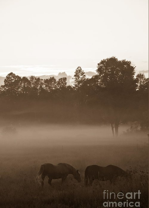 Landscape Greeting Card featuring the photograph Evening Fog by Cheryl Baxter