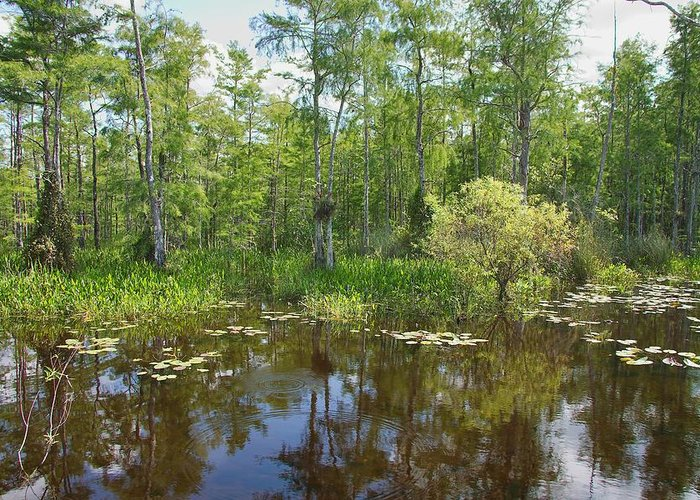 Everglades Greeting Card featuring the photograph Everglades Lake by Rudy Umans
