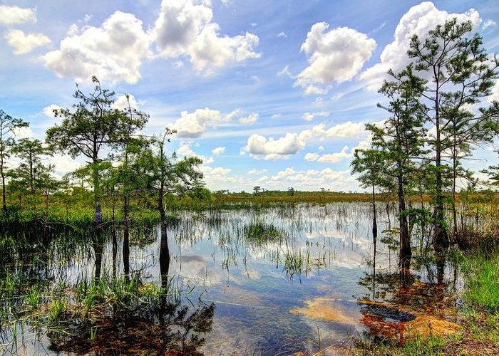 Everglades Greeting Card featuring the photograph Everglades Landscape 8 by Rudy Umans