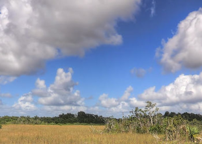 Beautiful Greeting Card featuring the photograph Everglades Landscape Panorama by Rudy Umans