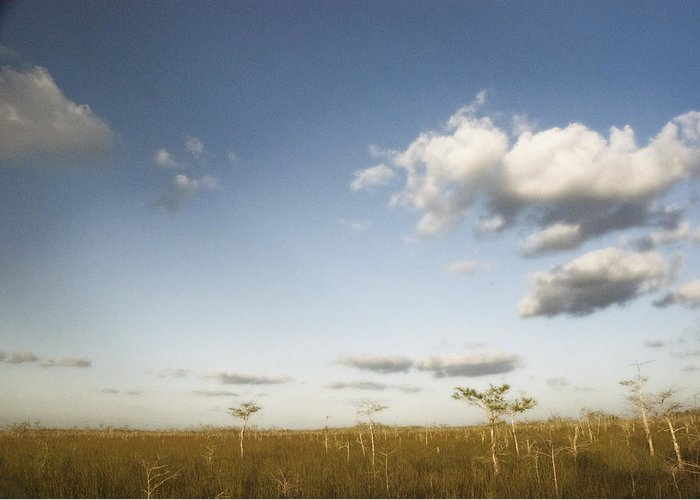 Everglades Greeting Card featuring the photograph Everglades Plain by Ari Jacobs