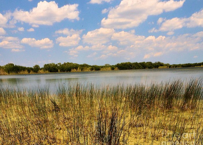 Everglades Greeting Card featuring the photograph Everglades Pond by David Call