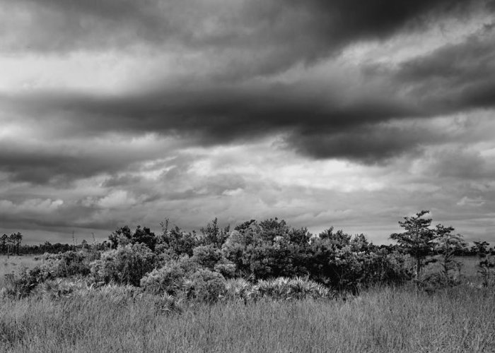 Bush Greeting Card featuring the photograph Everglades Storm Bw by Rudy Umans