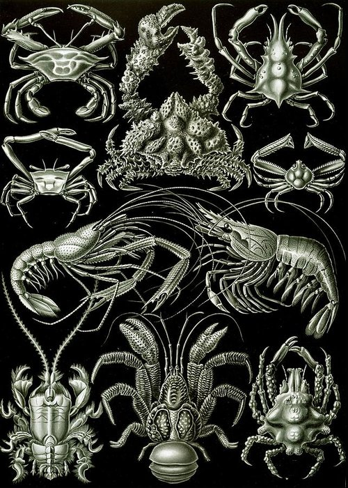 Crustacean Greeting Card featuring the painting Examples Of Decapoda Kunstformen Der Natur by Ernst Haeckel