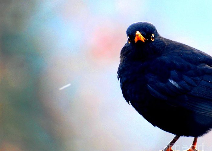 Bird Greeting Card featuring the photograph Exasperation by C Lythgo