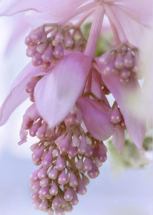 Rose Grapes Greeting Card featuring the photograph Exotic Malaysian Orchid by Julie Palencia