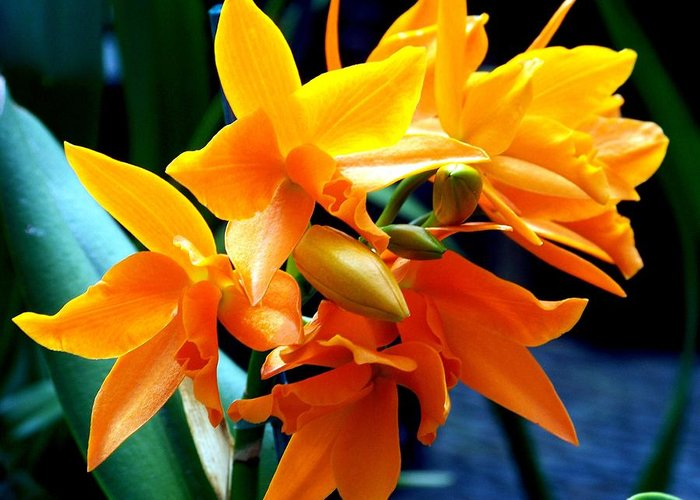 Flowers Greeting Card featuring the photograph Exotic Orange by Karen Wiles