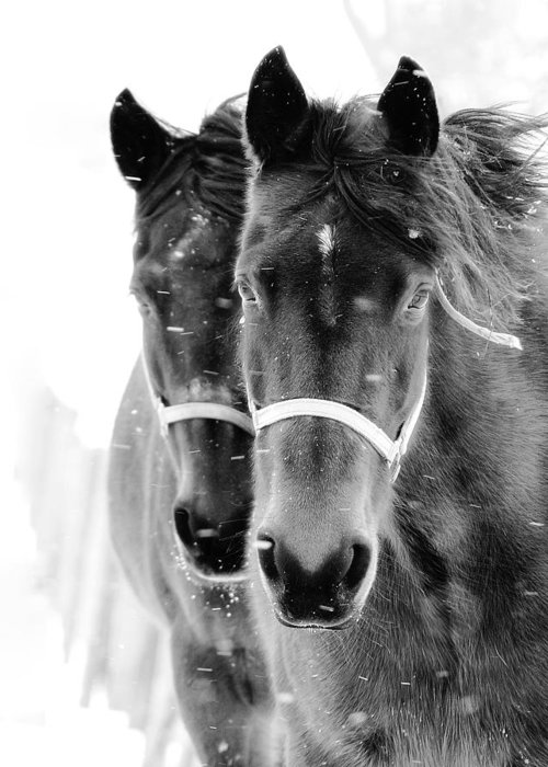 Horses Greeting Card featuring the photograph Expectation by Scott Stolsenberg