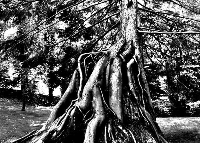 Tree Greeting Card featuring the photograph Exposed by Benjamin Yeager