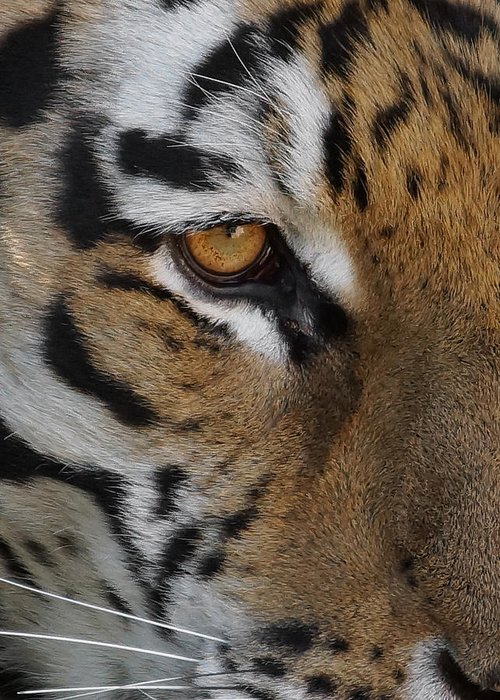 Tiger Greeting Card featuring the photograph Eye Of The Tiger by Ernie Echols