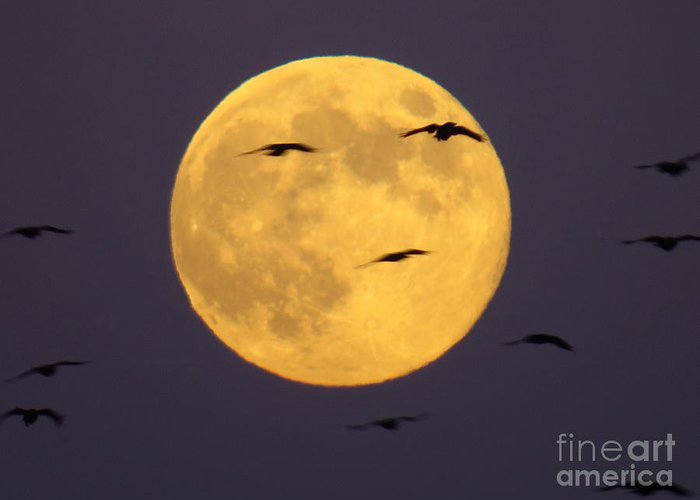 Fulll Greeting Card featuring the photograph Face On The Moon by Craig Corwin