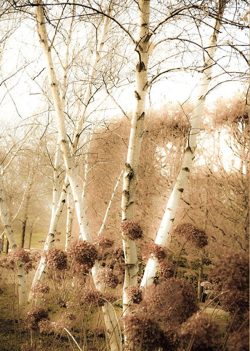 Landscape Greeting Card featuring the photograph Fading Fall by Julie Palencia