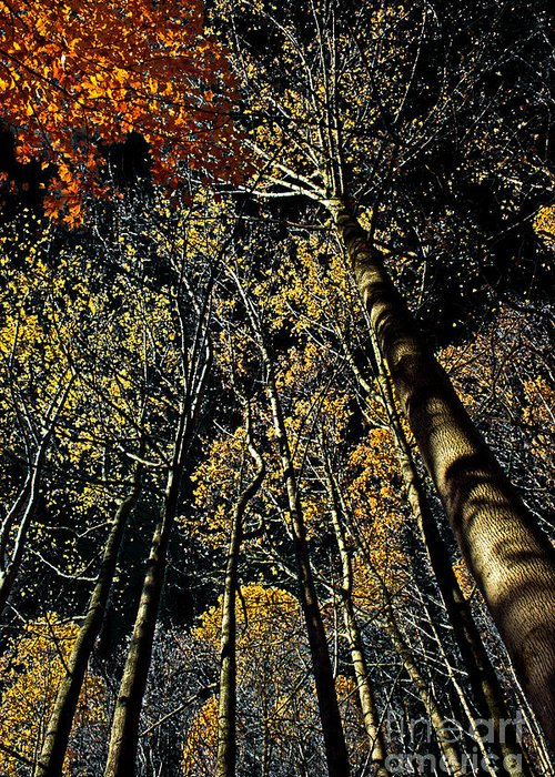 Season Greeting Card featuring the photograph Fall At Night by Tom Gari Gallery-Three-Photography