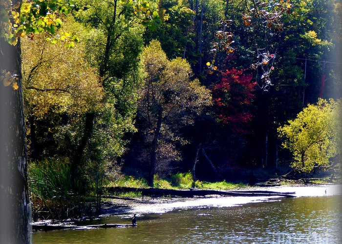 Autumn Greeting Card featuring the photograph Fall Beginnings by Rennae Christman
