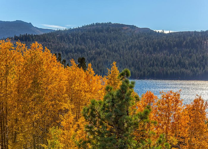 Landscape Greeting Card featuring the photograph Fall Color At Caples Lake by Marc Crumpler