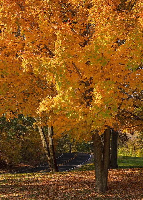 3scape Photos Greeting Card featuring the photograph Fall Colors by Adam Romanowicz